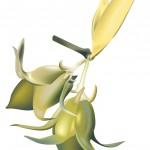 L'Huile de Jojoba : Merveilleuse régulatrice du sébum des peaux sèches, grasses et mixtes
