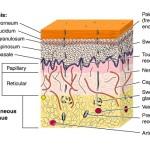 Comment hydrater la peau ? Avec ou sans glycérine ?