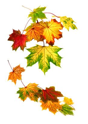 Taches Brunes sur les feuilles