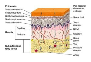 peau schema3
