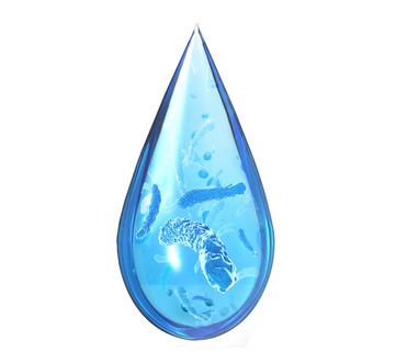 Goutte d'eau avec des bactéries à l'intérieur