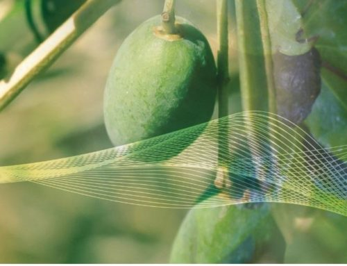 Le Secret anti-vieillissement des Plantes méditerranéennes !