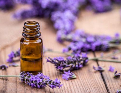Les huiles essentielles sont elles des perturbateurs endocriniens ?