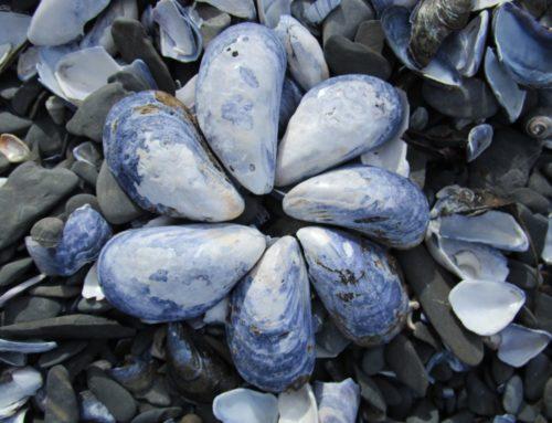 Zinc & Peau : pourquoi cet oligo-élément peut vous être bénéfique ?